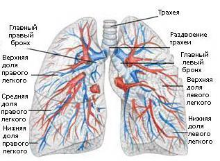 Las enfermedades del sistema broncopulmonar