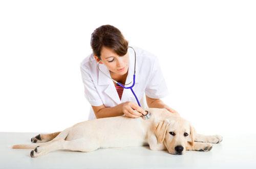 лечение онкологии у собак