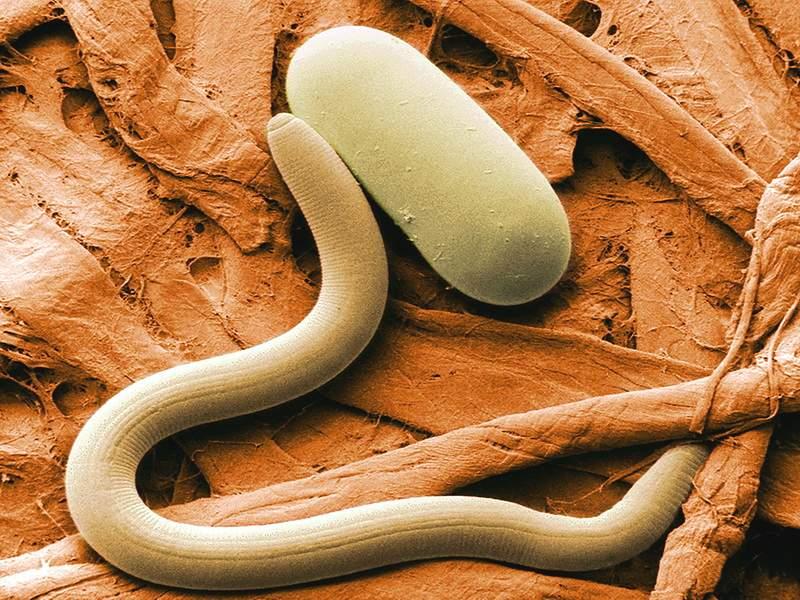 Лечение паразитарных заболеваний