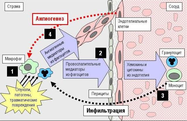Опухолевый ангиогенез