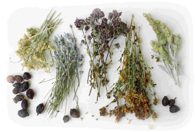 využití bylinné medicíny