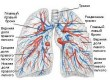 Diseases of the broncho-pulmonary system