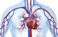 心血管系统的疾病